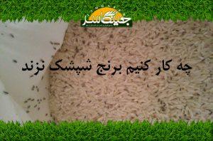 چه کار کنیم برنج شپشک نزند
